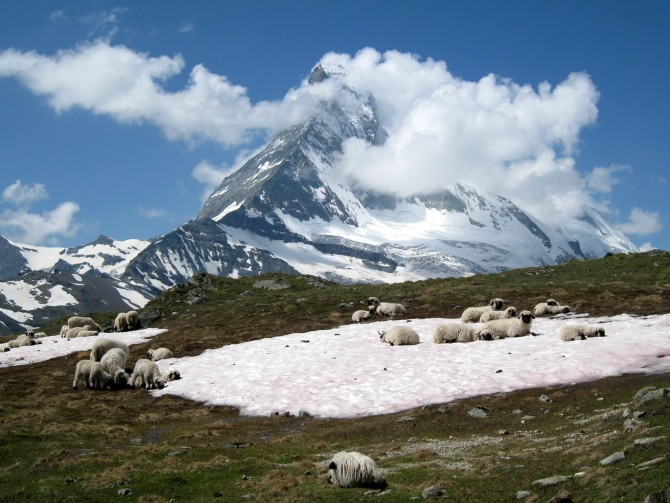 Sur les hauteurs de Zermatt